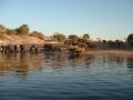 caprivi-elifants