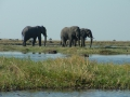 Caprivi Elephants